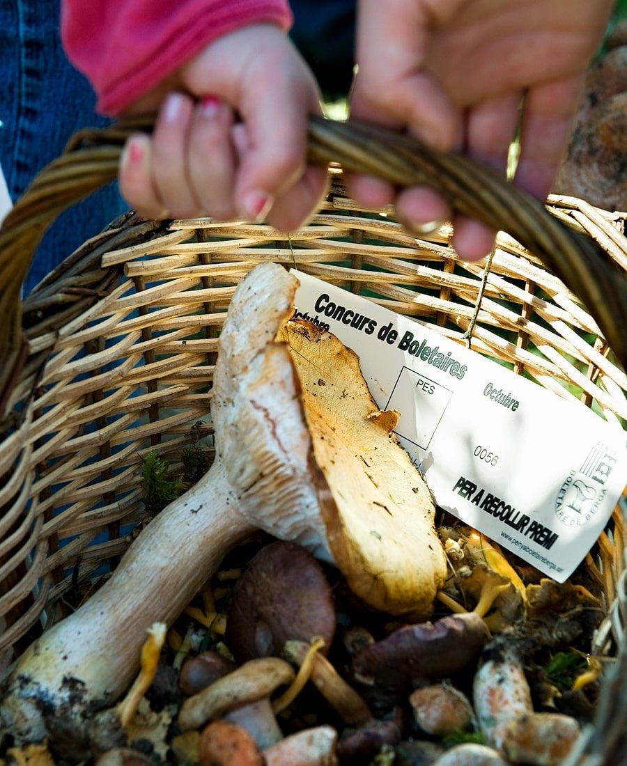 Gite con bambini: raccolta funghi in Catalunya