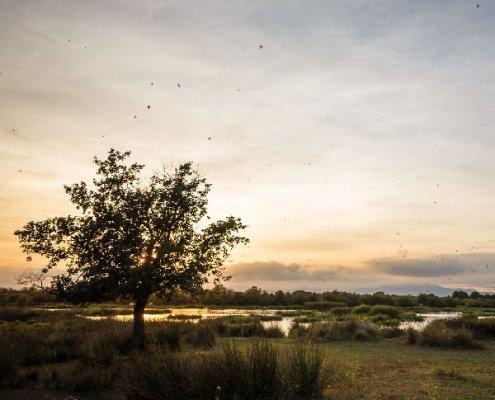 Birdwatching Parco Aiguamolls de l'Empordà