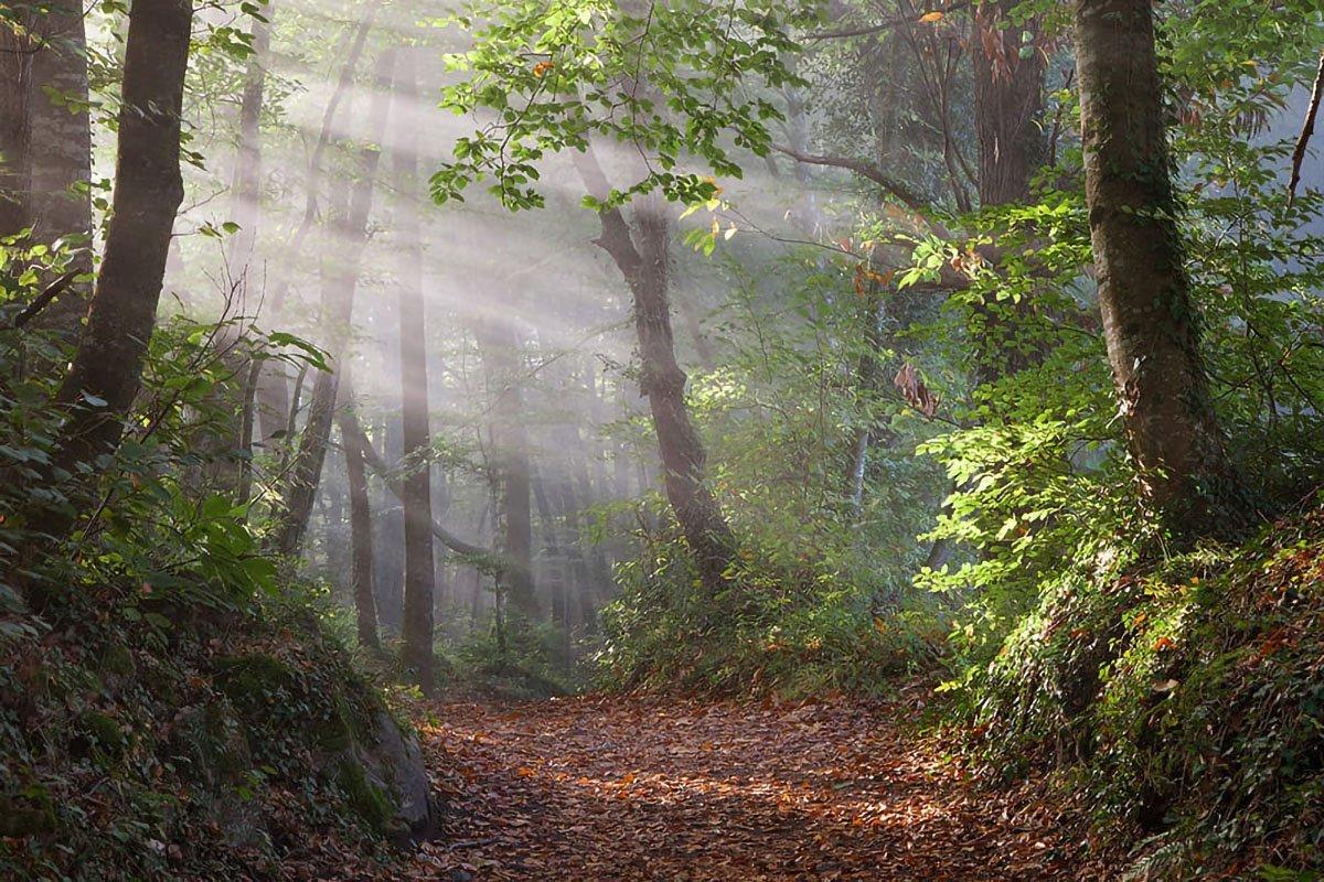 Forest Bath foresta catalana