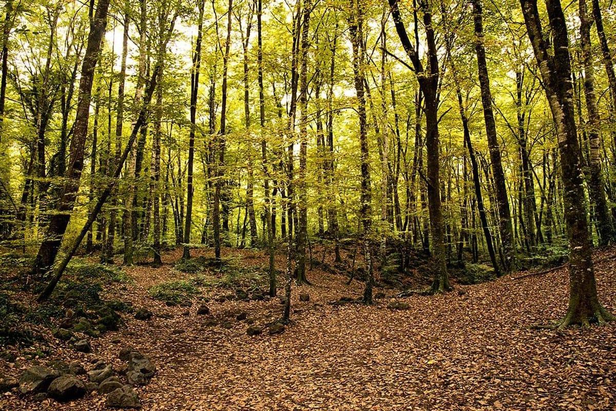 La Fageda interno bosco