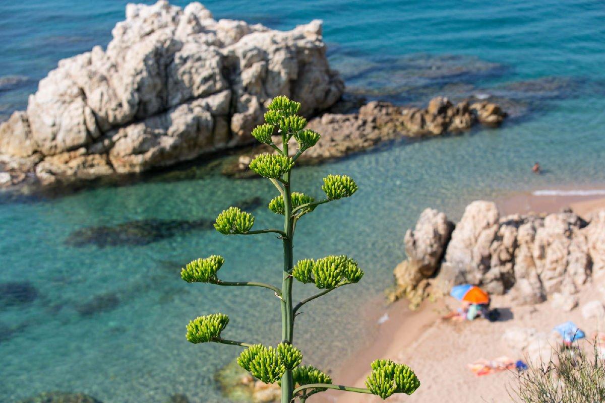 Roca Grossa Calella spiaggia