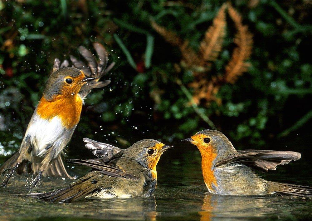 Birdwatching in Catalunya piccoli uccelli
