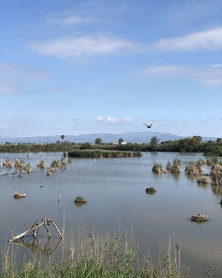 Delta Ebro panorama