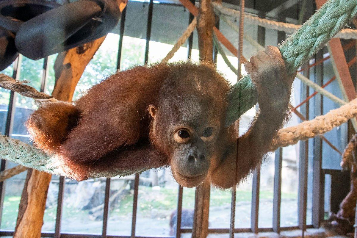 Zoo di Barcellona scimmia