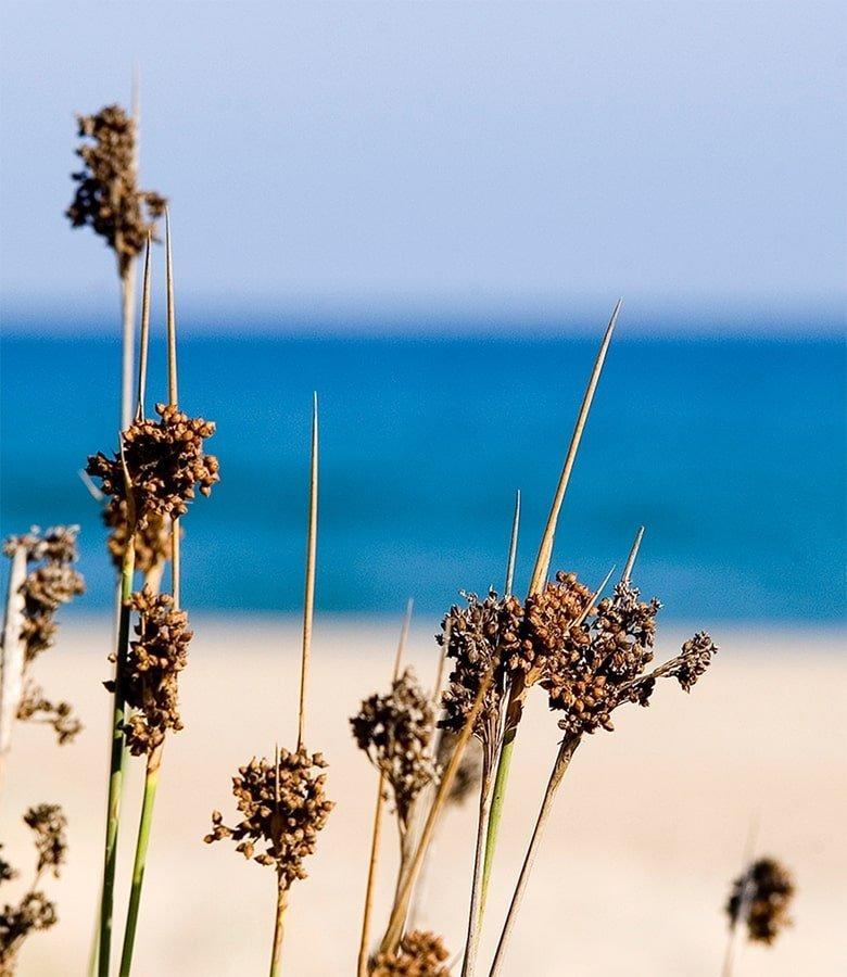 Costa Daurada mare e natura