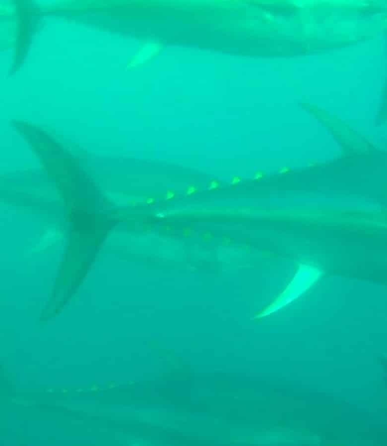 Tuna Tour Ametlla de Mar