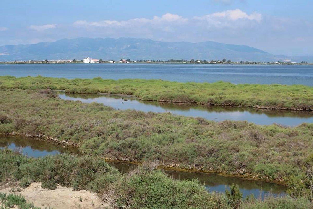 Delta de l'Ebre, meta di birdwatching