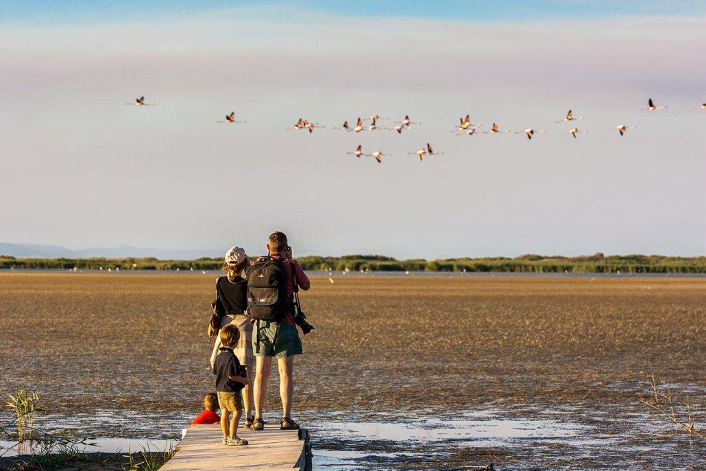 Birdwatching parco naturale Delta de l'Ebre