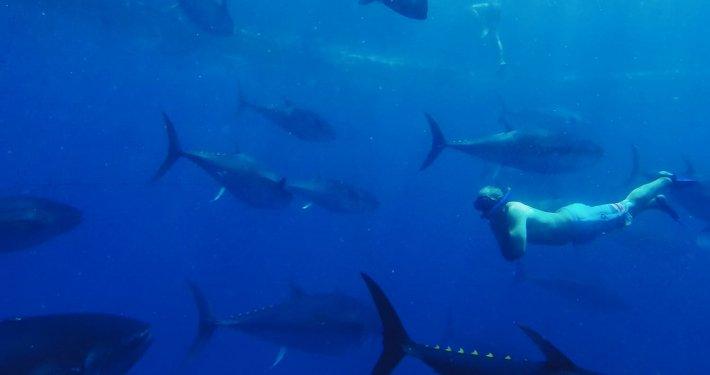 L'esperienza del Tuna Tour: nuotare insieme ai tonni